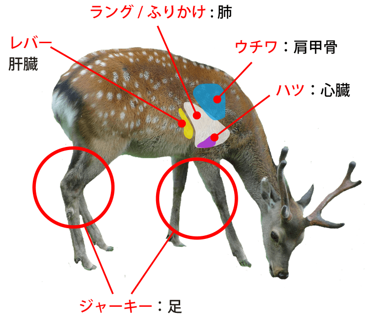 鹿肉の部位についての説明