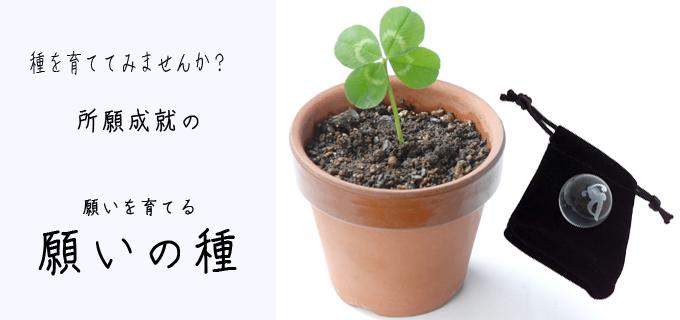 願いを育てる所願成就の〜願いの種〜