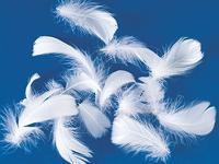 天然フェザー(コキール:ホワイト)の画像