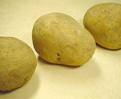 インカのめざめ(馬鈴薯)春作種芋1kg画像