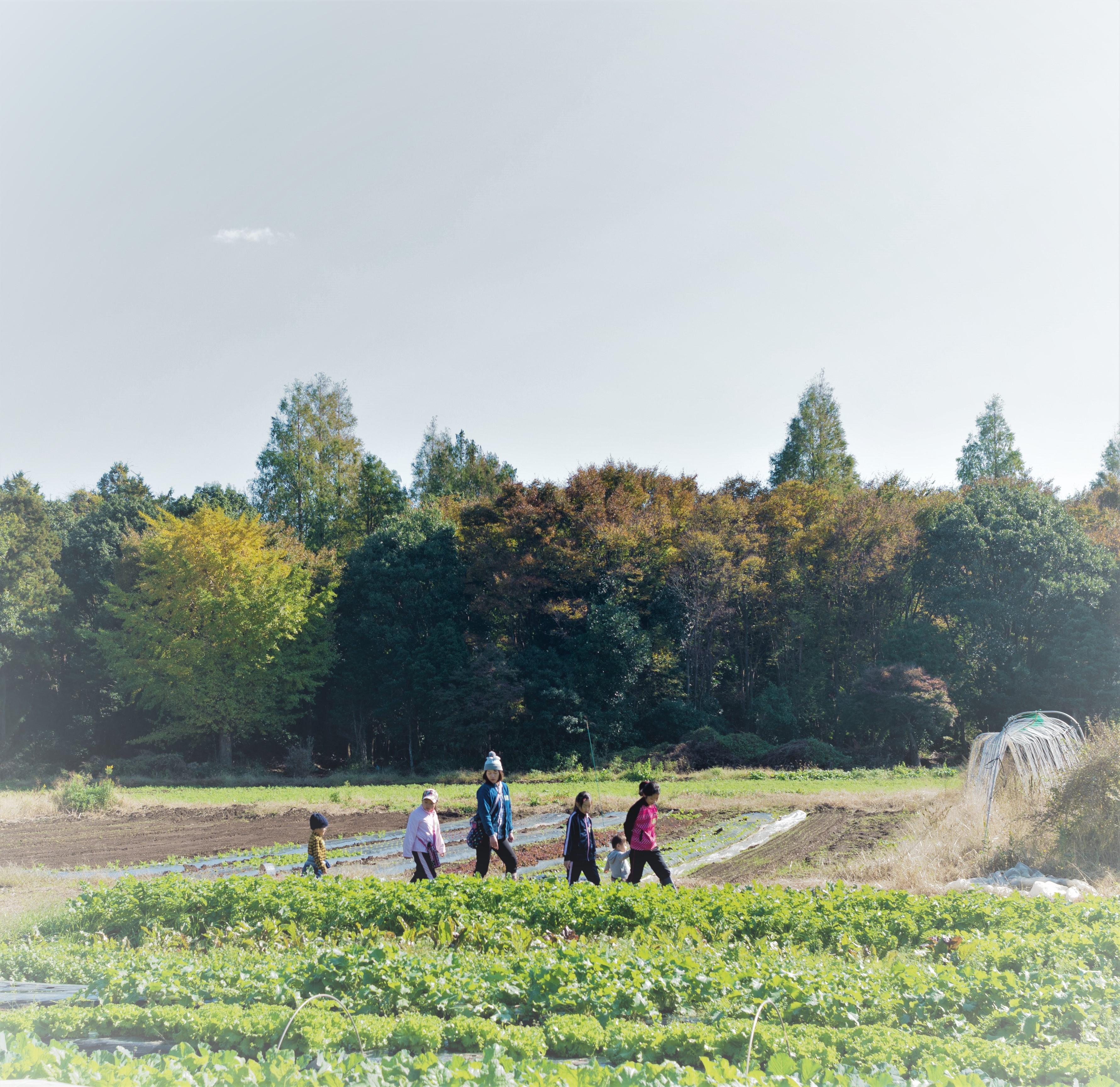 農園でゆっくり野菜収穫(4~6品目)&畑キッチン使い放題 Noraチケット 3回分 ★毎週金曜日OPEN★ 画像