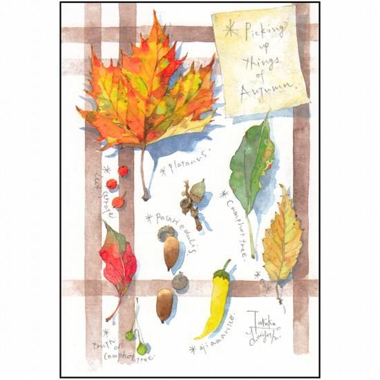 三好貴子 ポストカード(秋の拾いもの)の画像