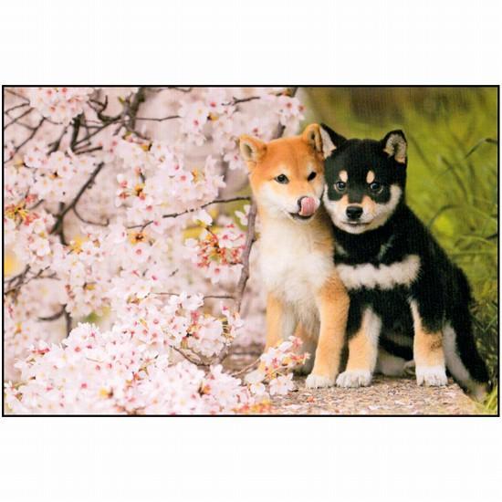 ポストカード(犬と桜)の画像