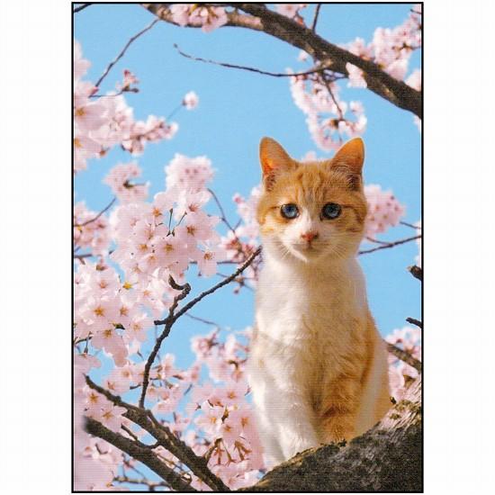 桜ポストカード(猫)の画像