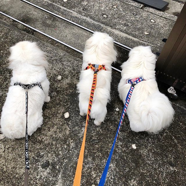 ペット用品 リード を除菌消臭