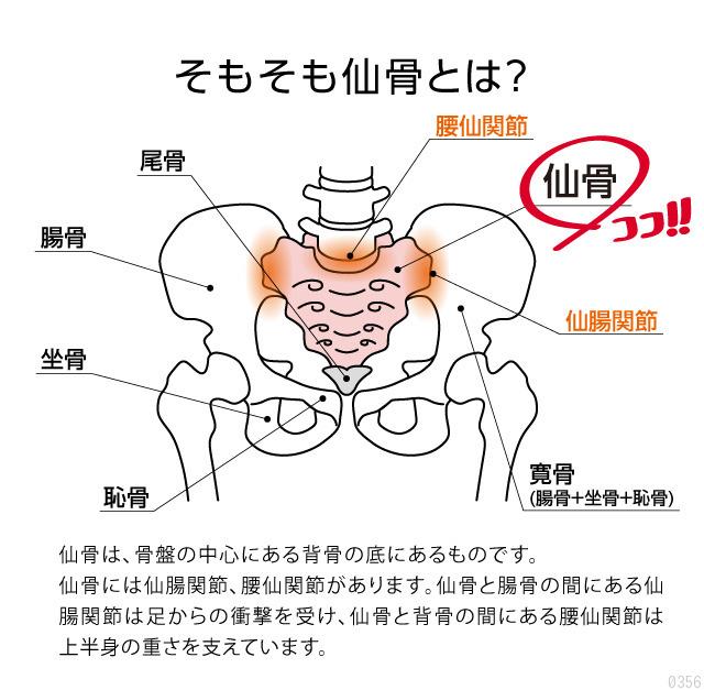 仙骨は、骨盤の中心にある背骨の底にあるものです。