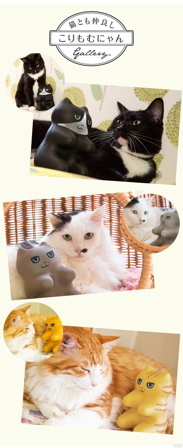 猫とも仲良し「こりもむにゃん」