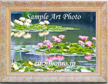 アートフォト「スイレンの池」画像