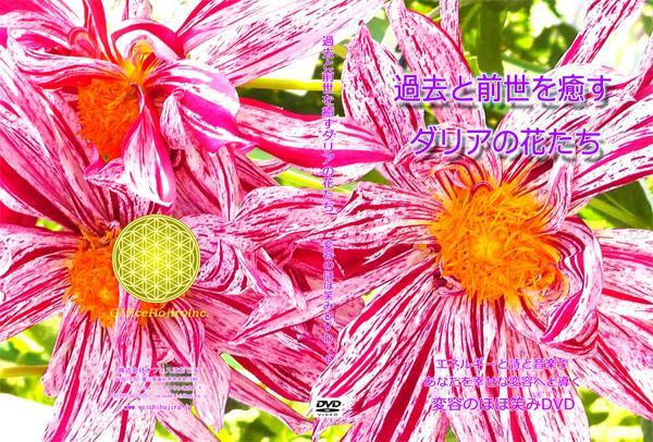 変容のほほ笑み®DVD 過去と前世を癒すダリアの花たち画像