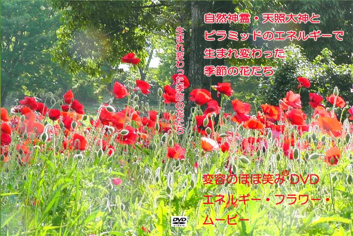 生まれ変わった季節の花たち 変容のほほ笑み®DVD気づきシリーズ画像