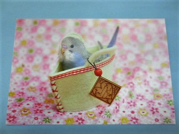 ポストカード セキセイインコ INバッグの画像