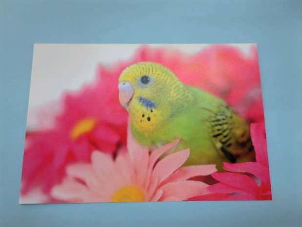 ポストカード セキセイインコ 花の中画像
