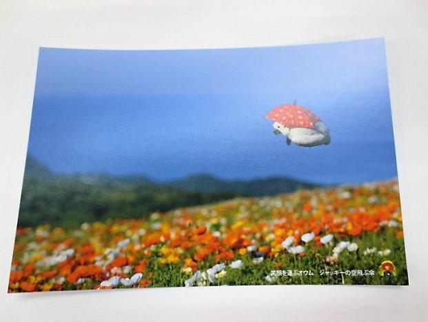 ポストカード オウム 笑顔を運ぶオウムジャッキーの空飛ぶ傘画像