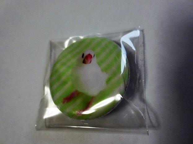 缶バッチ 文鳥 全身 白文鳥 の画像