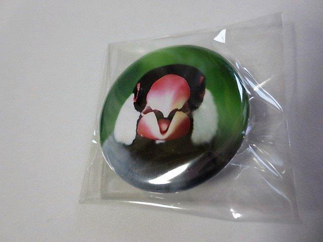 缶バッチ 文鳥 桜文鳥 正面 の画像