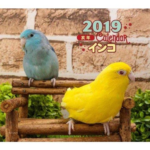 インコ カレンダー 2019 写真 大橋和宏画像