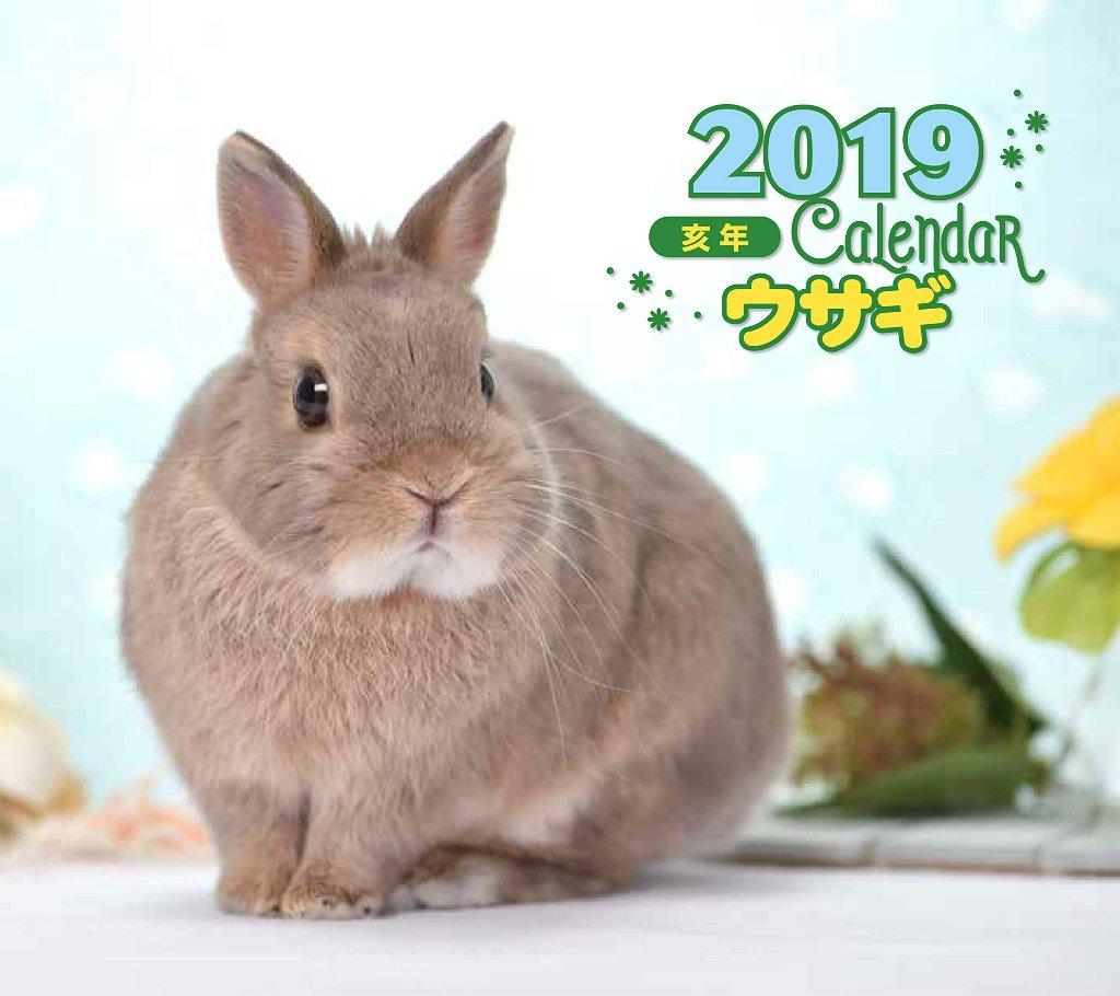 2019 ウサギ カレンダー 写真 井川俊彦の画像