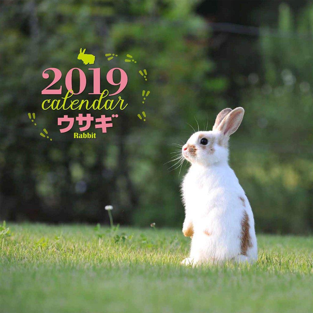 2019 ウサギ カレンダー 大判 写真 井川俊彦の画像
