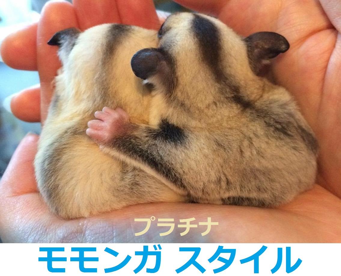ケージ フクロモモンガ